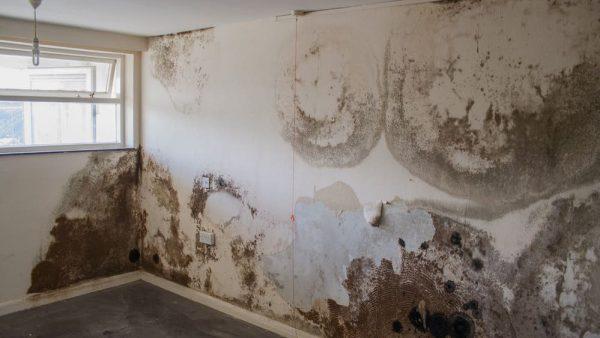 Cách xử lý tường bị ẩm mốc đơn giản mà hiệu quả